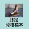 夏休み自由研究手作り骨格標本