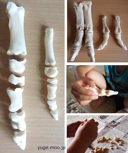 夏休み中の小学生が骨格標本を組み立てる